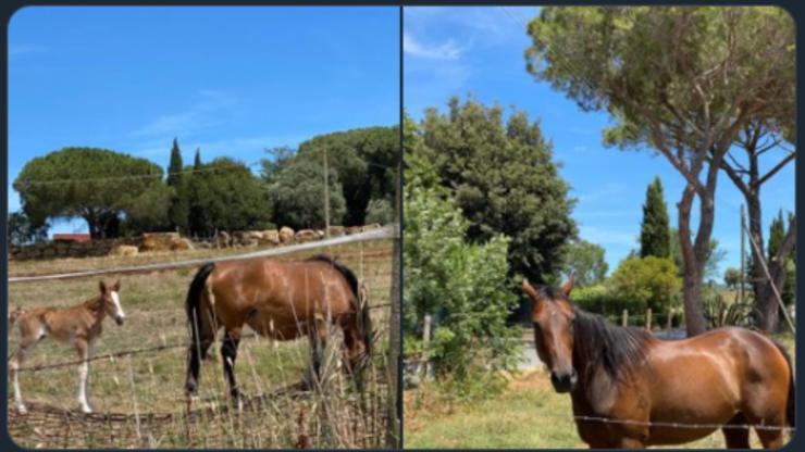 Screenshot Barbara D'Urso e i cavalli